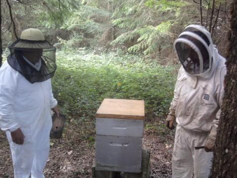 Les abeilles et le miel